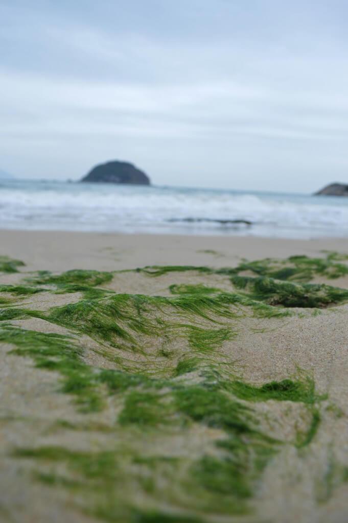 西冲沙滩植物